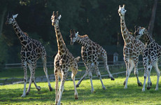 Why Cork's 'recession proof' Fota Wildlife Park may struggle to grow visitors in the recovery