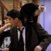 Using monkeys and apes in film and TV is 'misleading' millions of viewers