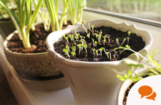 GIY: Sow seeds on a sunny indoor windowsill and try this cheesy leeks recipe