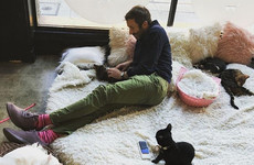 Chris O'Dowd took Dawn O'Porter to a cat café for her birthday, is a terrific husband... It's the Dredge