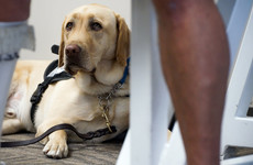 US airlines are tightening the leash on 'emotional support animals'