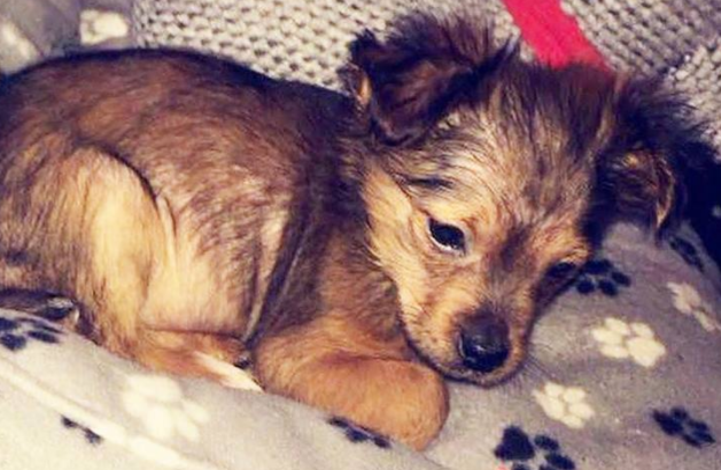 Man appears in court accused over puppy killing