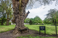 Have you heard about the hungry tree in Dublin 7?