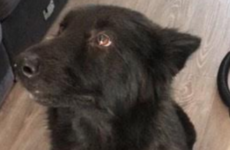 This dog found her way back to her owners after being missing in Dublin for a year