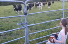 This little girl from Cork charmed the internet by playing her concertina for cattle