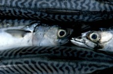 Ireland pushes for sanctions against Faroe Islands, Iceland for 'unsustainable fishing'