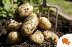 GIY: 'This St Patrick's Day I will be out (as I am every year) sowing my spuds for the year'