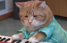 People are absolutely devastated about the untimely passing of Bento, the Keyboard Cat