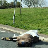 Gardaí launch investigation after horse dies on road in Cork housing estate