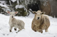 'Close to a national emergency' - Farmers hit by bad Easter weather call for help