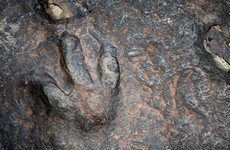 170 million-year-old dinosaur footprints discovered on Scotland's Isle of Skye