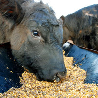 �1.5m allocated to support fodder imports in effort to ease feed crisis