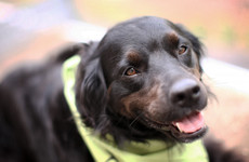 'It's about giving people rights': Assistance dogs could become exempt from dog licences