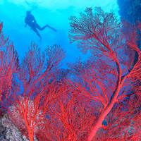 Great Barrier Reef corals experiencing 'catastrophic die-off' as result of global warming