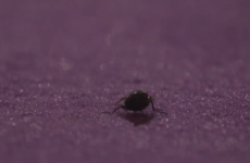 While we were all watching The Late Late referendum debate, a fly stole the show on Graham Norton