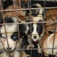 27 dogs found in van at Scottish ferry port returned to Ireland