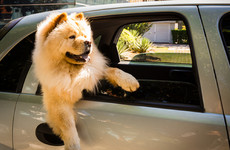 We could be heading into a heatwave - here are some tips on keeping your pets cool and happy