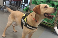 Cannabis worth €23k seized after detector dog Bailey finds it in vacuum cleaner