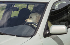 Gardaí and DSPCA warn dog owners to be careful after dog left in hot car found 'in distress'