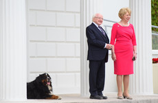 We need an Instagram account devoted to Michael D's dogs Bród and Síoda immediately