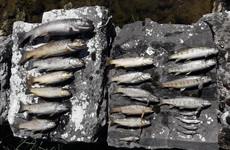 Over 10,000 protected lamprey fish killed in suspected chemical poisoning