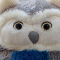 Our Lady's Children's Hospital in Crumlin wants to reunite this owl with its owners
