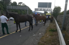 M50 southbound closed after horsebox overturns