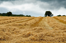 The cereal harvest is forecast to be the worst in 24 years