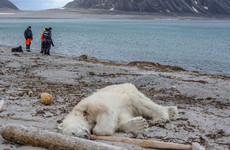 Polar bear shot dead in 'self-defence' after wounding cruise ship worker