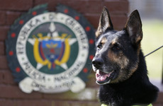 Colombian police say threats against dogs happen on 'daily basis' as top canine put in protection