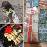 Revenue detector dog Josie helps find �90k in cash that could be connected to criminal activity