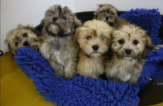ISPCA rescues 86 dogs and puppies from illegal dog breeder