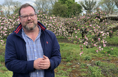 'If you went to the bank and said you wanted to start an orchard, they'd tell you to cop on'