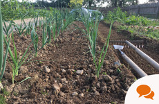 In the garden: Even in the calm of the vegetable patch, it can be hard to stay mindful and focused