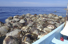 300 endangered sea turtles were killed by illegal fishing nets off the coast of Mexico