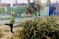 Dublin City Council to spend €360,000 on Christmas trees - that's about €600 per tree