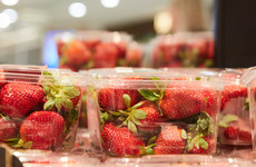 'Food terrorism': Australian strawberry scare continues as more needles found in fruit in copycat attacks