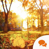 The Irish For... You'll find some of the most beautiful autumnal words as Gaeilge