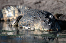 Body recovered after Aboriginal woman taken by crocodile in Australia
