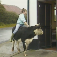 It's been 30 years since RT� News covered a story about an 11-year-old girl who rode her cow around Mullingar