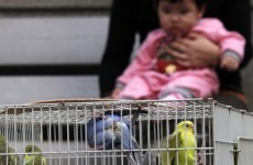 Hong Kong reports first Bird Flu in eight years