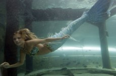 Mermaids don't exist: official line from US government