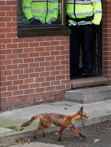 Harcourt Street Garda Station's Visitor of the Day