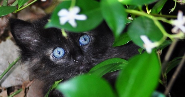 It's Friday (the 13th)! So here's a slideshow of black cats and kittens from around the world