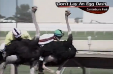 VIDEO: Ostrich racing commentator is really trying very hard
