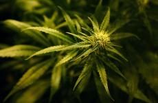 Cannabis plants worth estimated €200,000 seized in Dublin