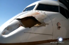 What happens when an aeroplane hits a bird? This.
