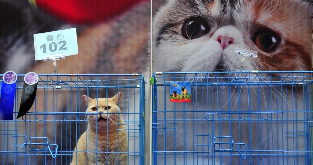 Pictures: Want to join the Cat Fanciers Association?...