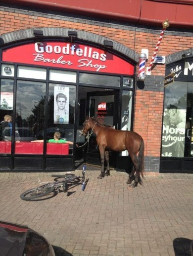 The Real Horse Outside in Limerick Pic of the Day
