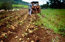Price of spuds shoots up